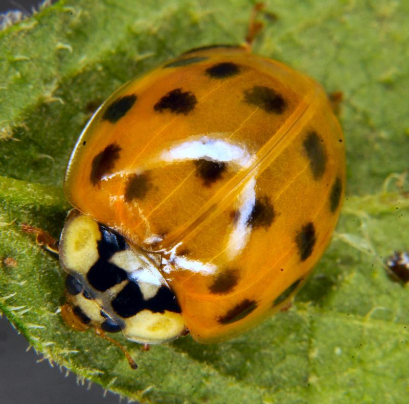 A ladybird