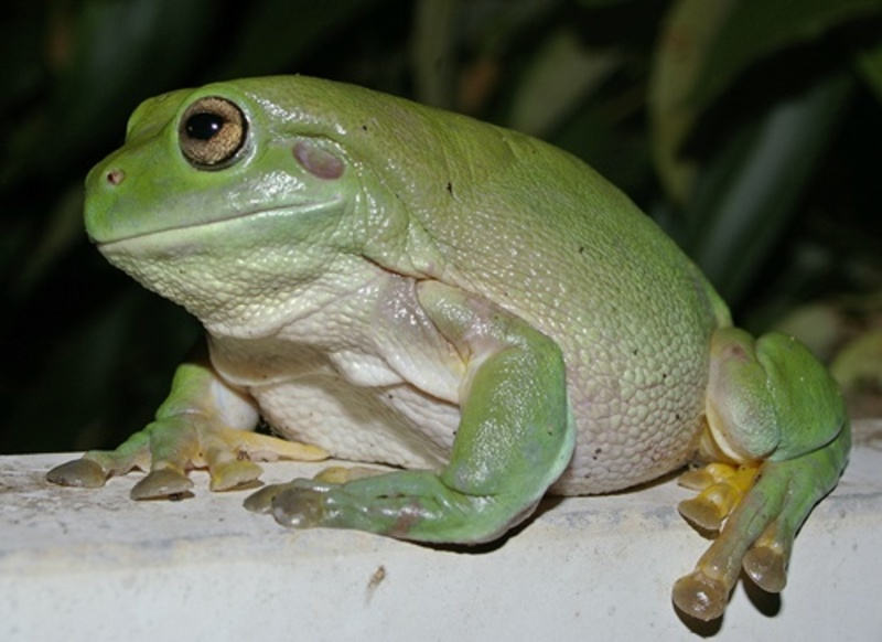 are,you,scared,of,frogs,or,grasshoppers  - Are you scared of small animals that jump?