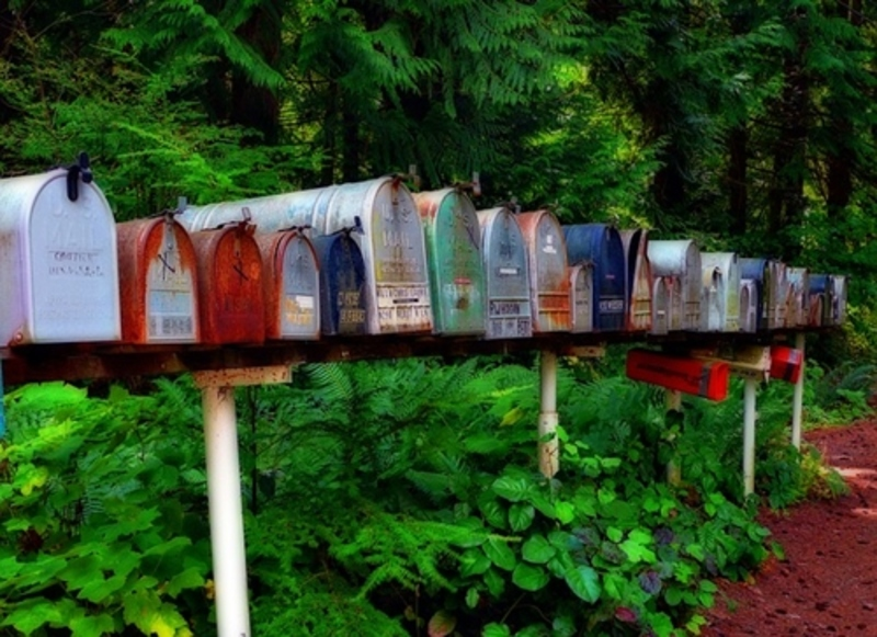 do,you,get,snails,eating,mail,in,your,letterbox  - Do you get snails eating your mail in the letterbox?