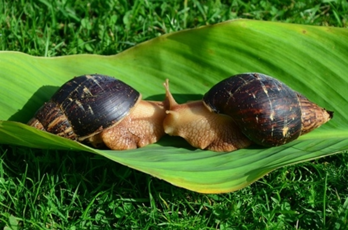 do,you,have,a,lot,of,snails,in,your,garden,at,the,moment