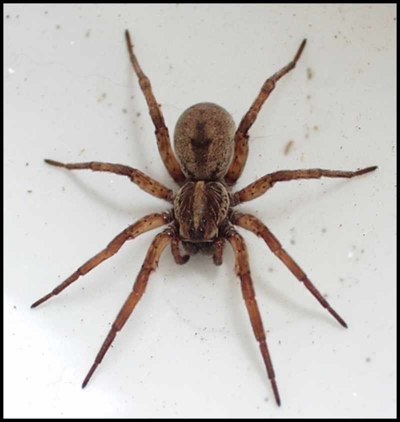 do,you,have,a,lot,of,spiders,in,and,around,your,home