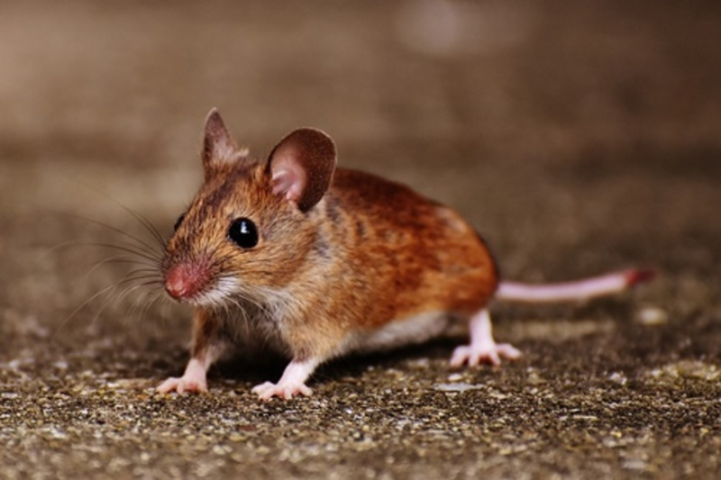 Do,you,have,mice,in,your,house  - Do you have mice in your house?
