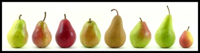 Do,you,like,pears,and,do,you,have,a,favourite,type
