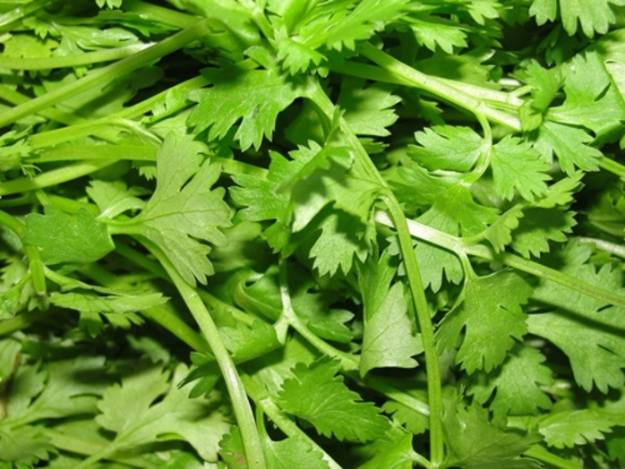 do,you,use,coriander,in,cooking,or,salads