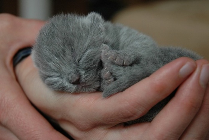 have,you,ever,had,a,newborn,kitten