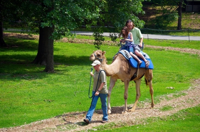 have,you,ever,ridden,on,a,camel,or,an,elephant