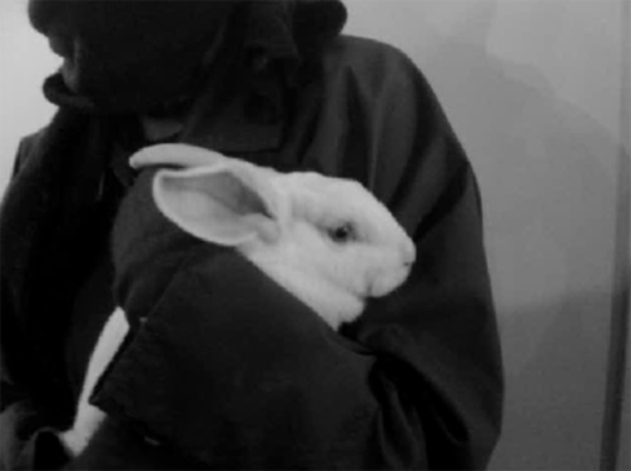 Highgate rabbit farm, rabbit rescued by ALF, animal rights