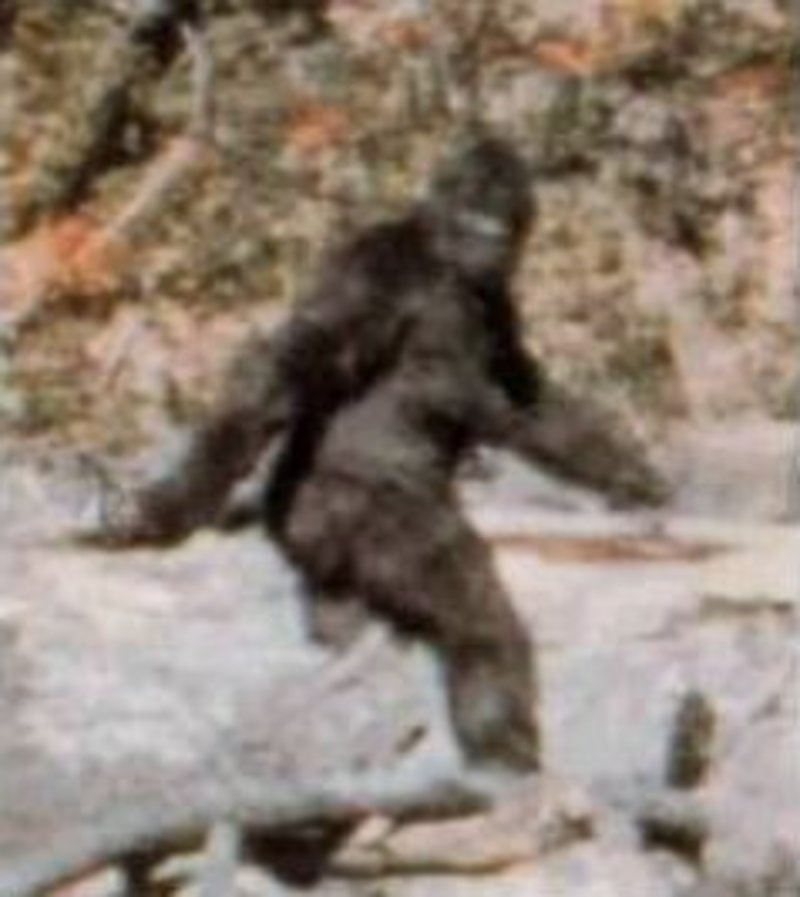 Patterson-Gimlin film, bigfoot, bigfoot hoax  - Do you have a favourite cryptid?
