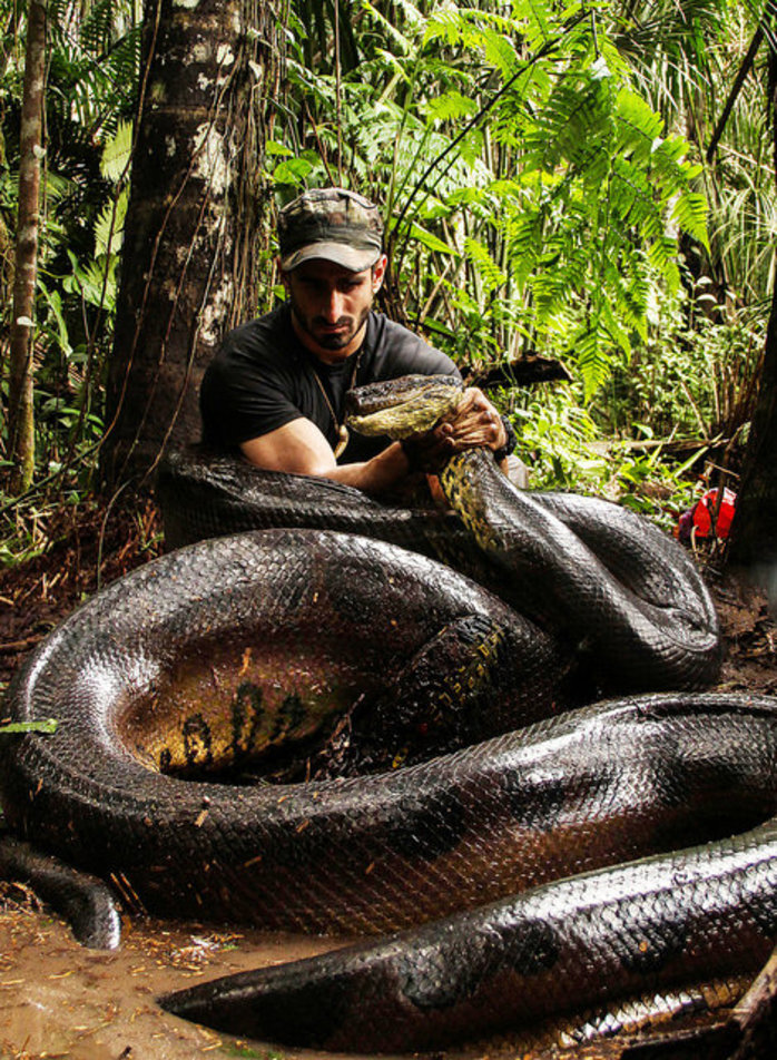 paul with anaconda