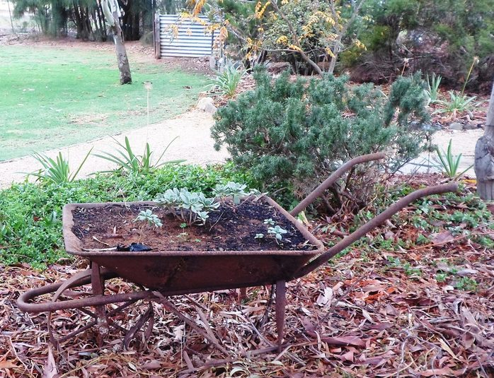 Plants in wheelbarrow