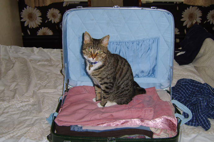 suitcase packing clothes holiday cute cat