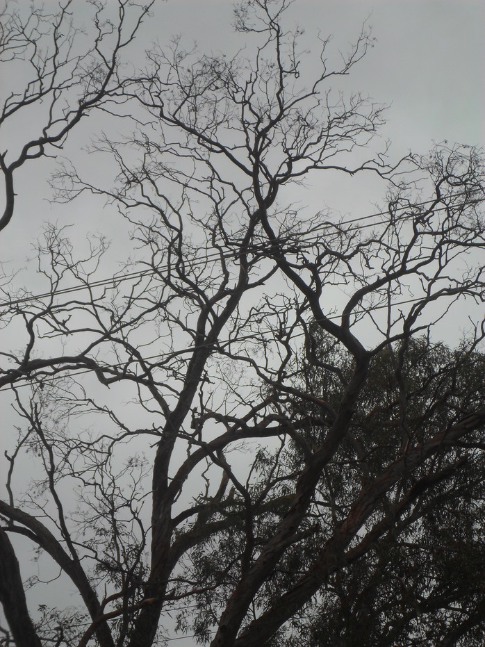 Tree And Grey Sky