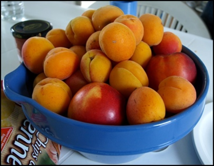 would you,rather,peaches,apricots,or,plums