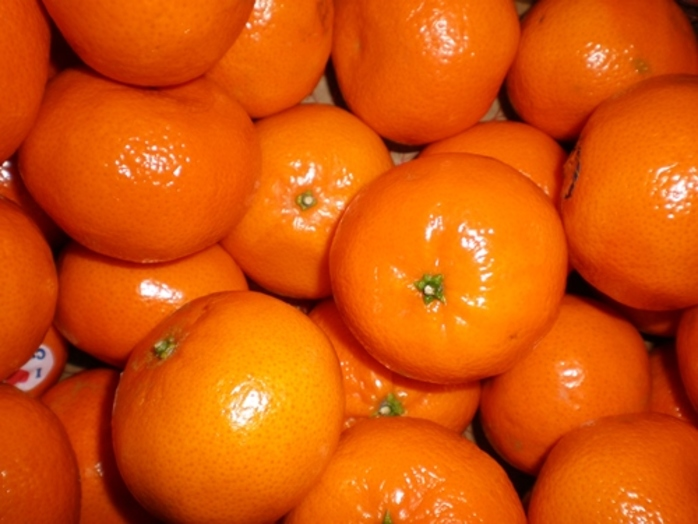 would,you,rather,a,mandarin,or,an,orange