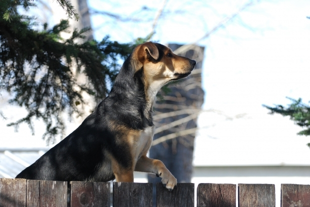 dog  - What animal would you want to be reincarnated as?