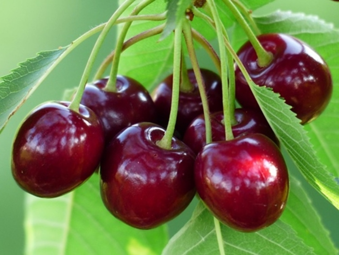 do,you,buy,cherries,when,they,are,very,expensive