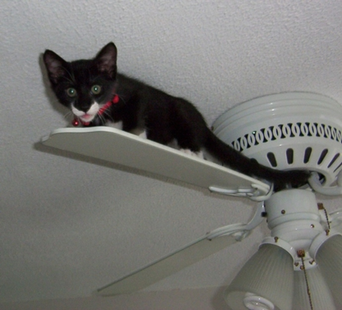 do,you,have,ceiling,fans,and,do,you,like,them