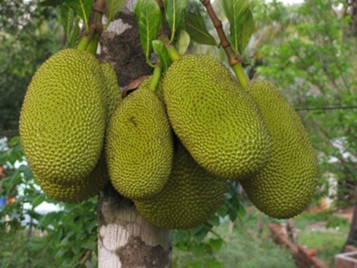 Have you ever tasted Jackfruit