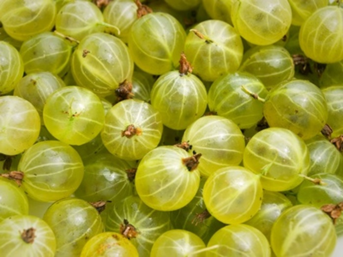 have,you,ever,tried,gooseberries
