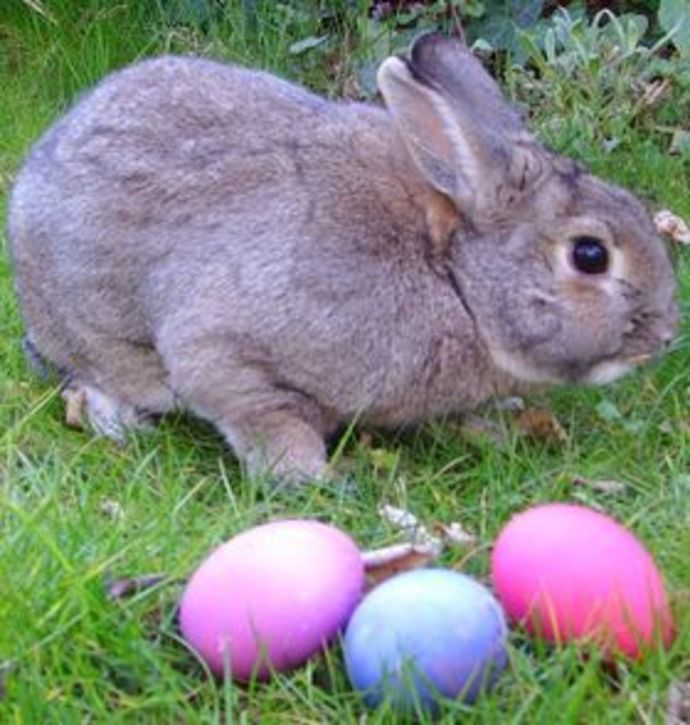 just another rabbit near easter eggs