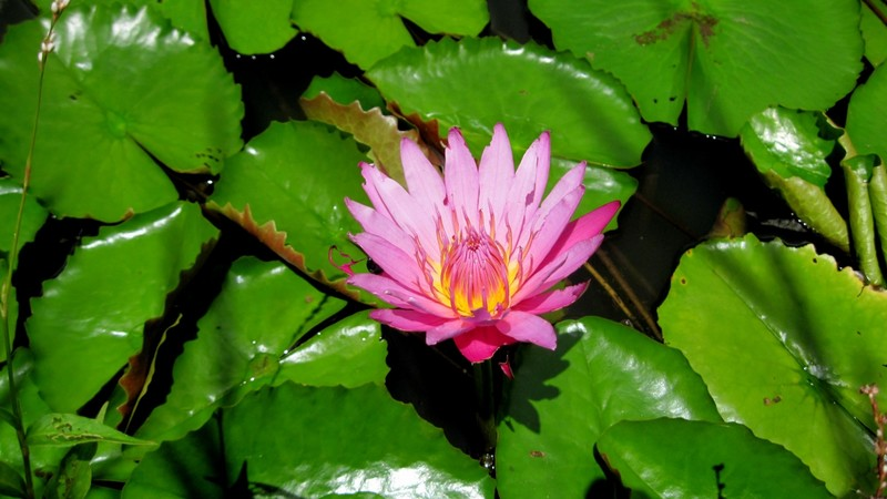 Lotus flower  - Do you use anatomically correct names for genitals with your children?