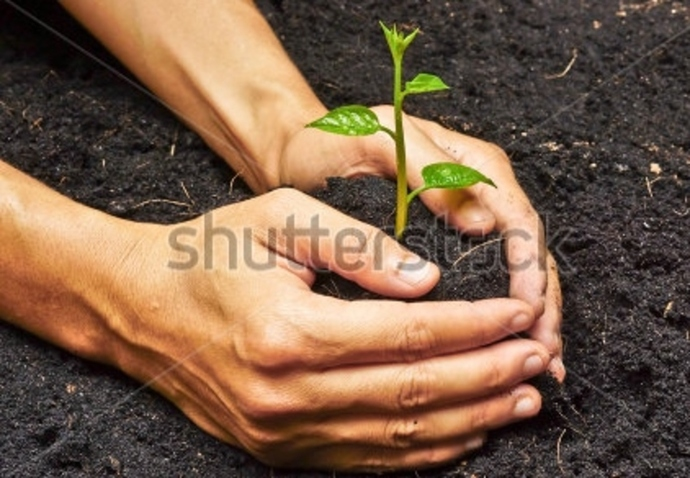 r,u,planting,vegetables,and,herbs,now