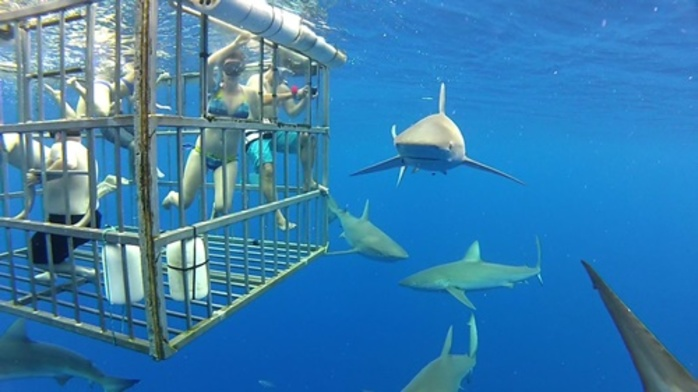 would,you,go,in,a,cage,to,view,sharks,up,close
