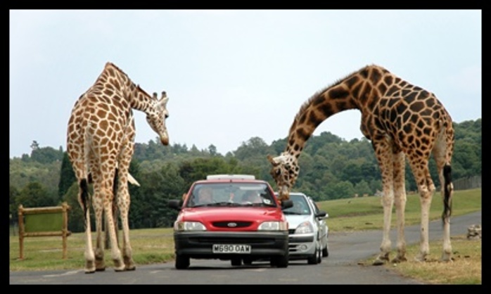 would,you,like,to,go,on,safari,in,south,Africa