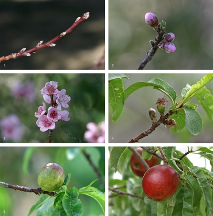 would,you,rather,grow,flowers,or,fruit